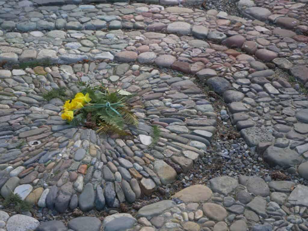Labyrinth daffodils