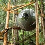 In the Trees: Your PNW Treehouse Bucket List