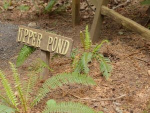 Upper Pond sign at Treehouse Point