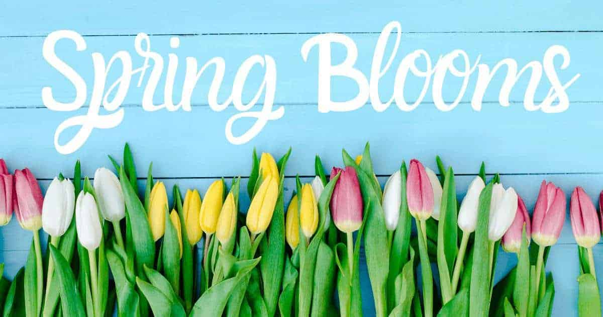 Spring Blooms Tulips Pacific Northwest Spring Events 2020 Seattle Spring Events Pacific Northwest Spring Events