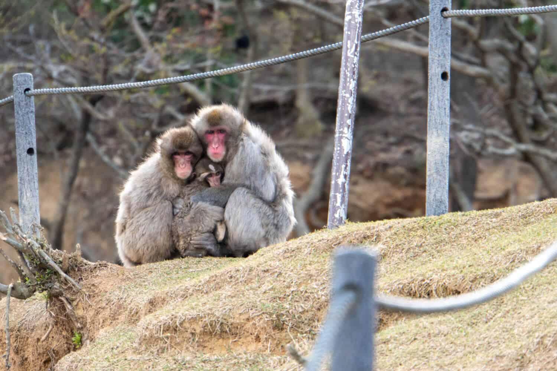 Kyoto Arashiyama Monkey Park Iwatayama
