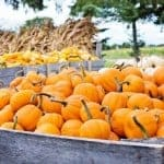 Remlinger Farms Pumpkin Farm Festival Seattle Pumpkin Farms Seattle in October Autumn Events Puget Sound