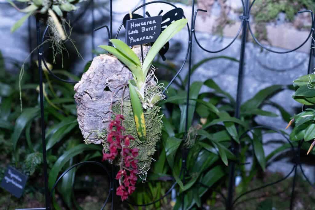 orchid hanger at 2020 Northwest Flower and Garden Festival