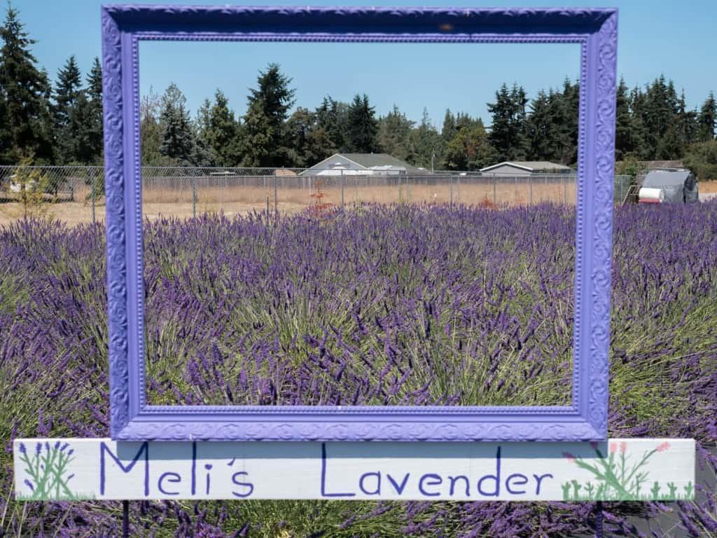 Melis Lavender Farm Sequim Lavender Festival