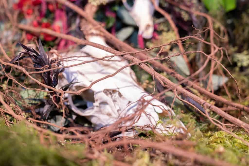 Skull in Persehone Fleur de Ville at the Northwest Flower and Garden Festival 2020