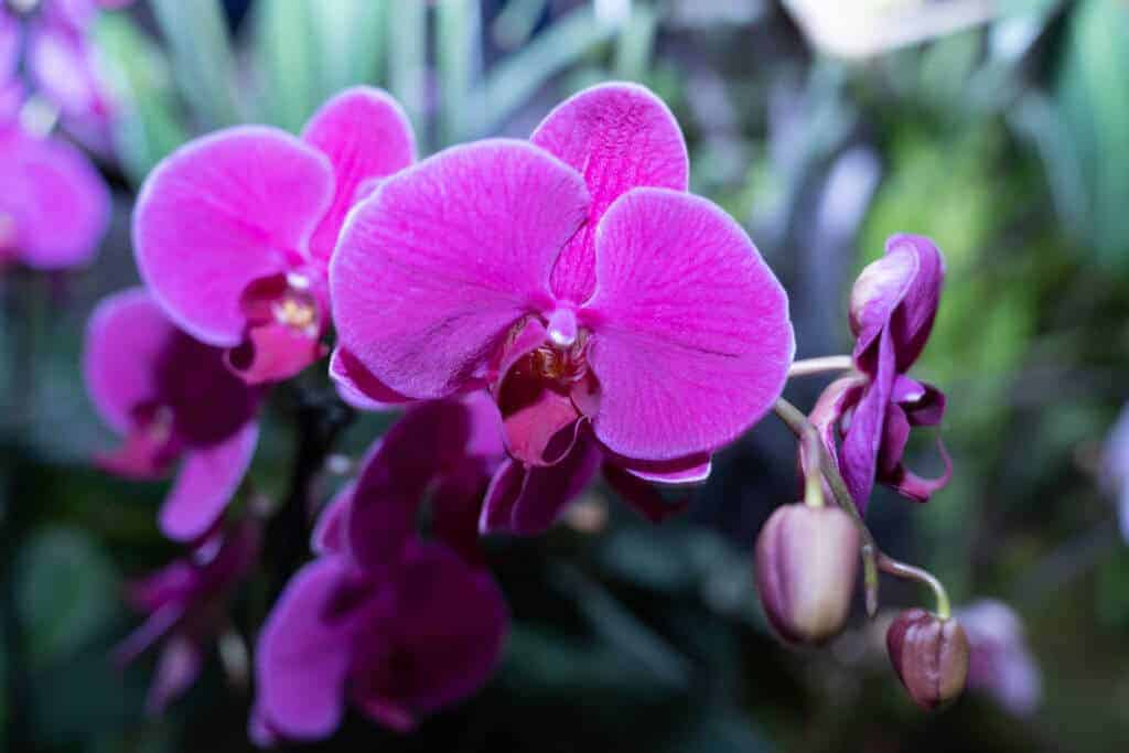 Orchid at 2020 Northwest Flower and Garden Festival
