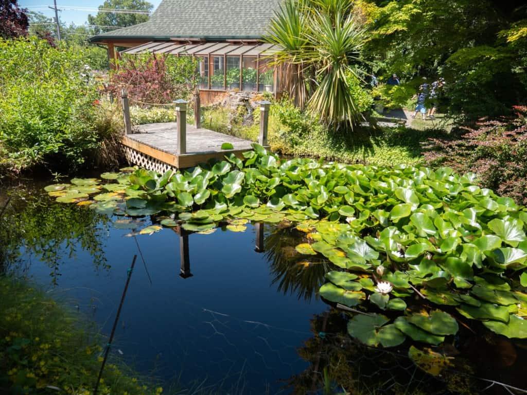 Pond at Fatcat Lavender