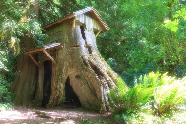Stump House Guillemot Cove Nature Reserve Trail Maps