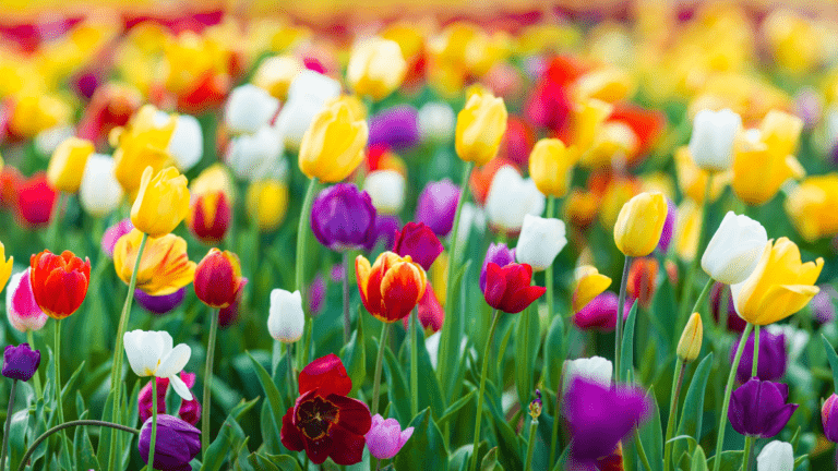 Celebrate Spring! Pacific Northwest Spring Festivals and Events.